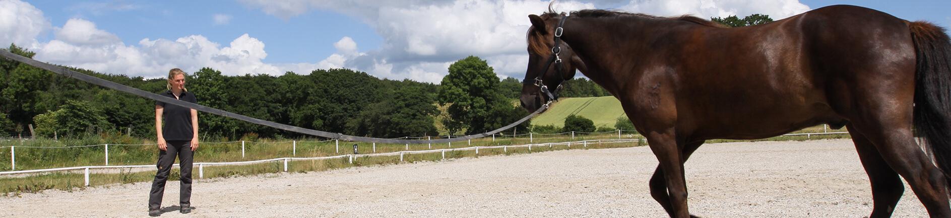 horsen